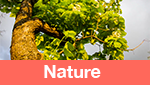 Category Nature